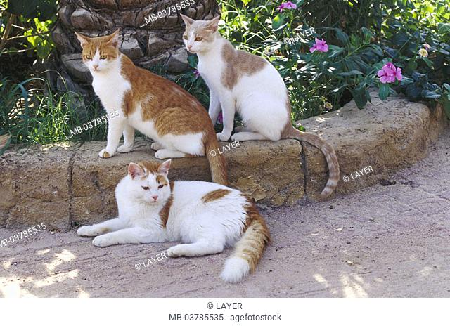 Garden, wayside, cats, red-white   Animals, mammals, pets, house cats, three, free-living, lie, sitting, peacefully, observing, alertly, shadow place, outside