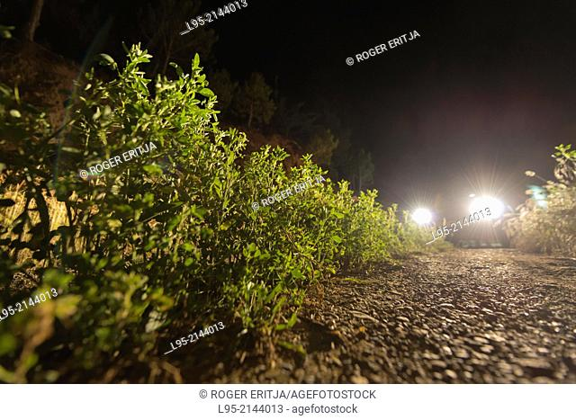 Dusty trail photographed by night at the lights of a car, Spain