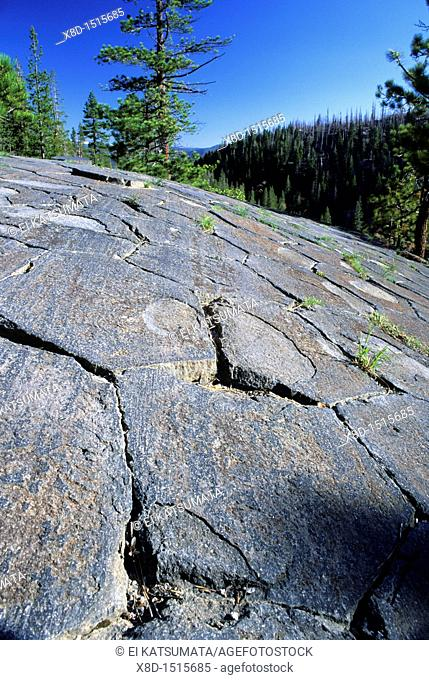 Glacially polished basalt columns, Devils Postpile National Monument, California, United States of America