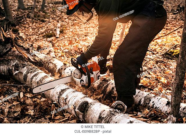 Mature man chainsawing tree trunk on autumn forest floor