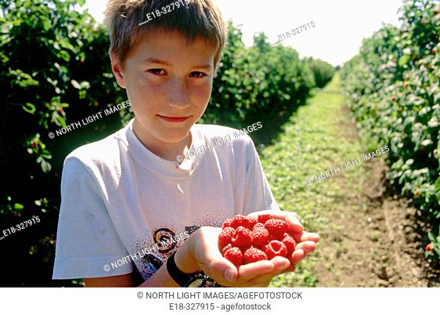 Canada, British Columbia, Ladner. Dylan, age 10, with hands full of ripe raspberries