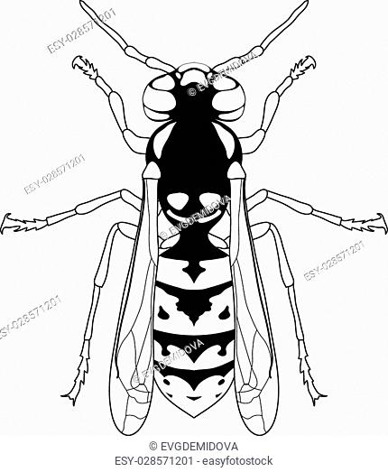 Wasp Body Part Diagram