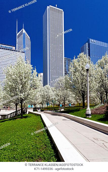 Blossoming cherry trees in Millenium Park with city skyline in downtown Chicago, Illinois, USA
