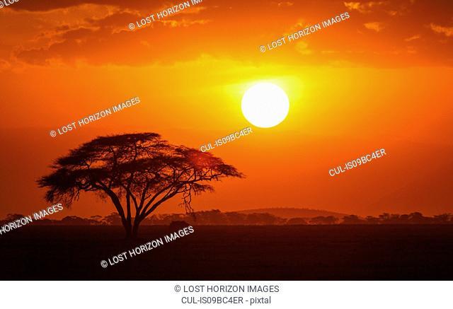 Sunset over a lone acacia tree in Amboseli National Park, Amboseli, Rift Valley, Kenya