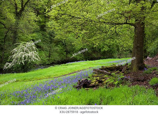 Hartford Bottom in spring, Exmoor National Park near Hartford, Somerset, England