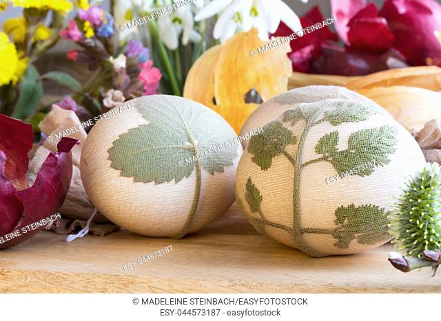Preparation of Easter eggs for dying with onion peels: eggs with a pattern of fresh herbs, onion peels, coltsfoot, lungwort and snowdrop flowers in the...