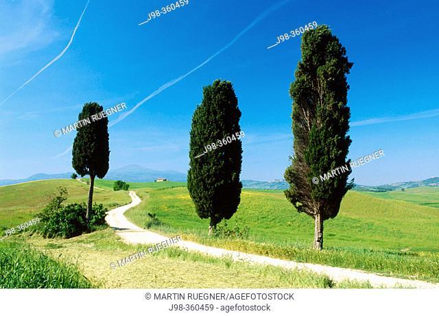 Way with cypress trees near Pienza. Val d'Orcia. Siena province. Tuscany. Italy