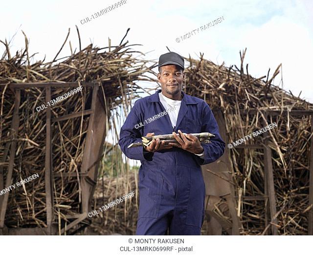 Worker Holding Harvested Sugar Cane