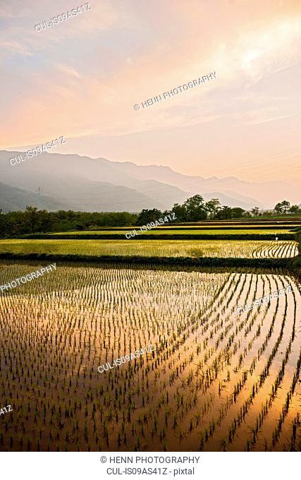 Rice field close to Seoraksan National Park, Gangwon, South Korea