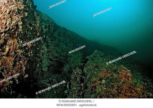Tectonical rift underwater, Afar Triangle, Gulf of Aden, Gulf of Tadjourah, Djibouti Djibuti Africa