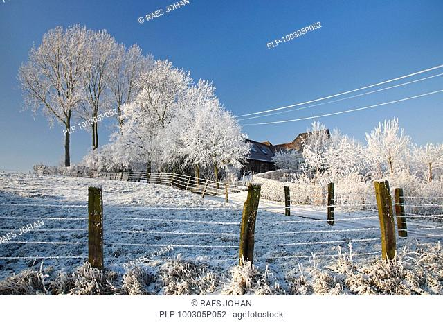 Trees along field covered in hoarfrost in winter in the Flemish Ardennes, Belgium