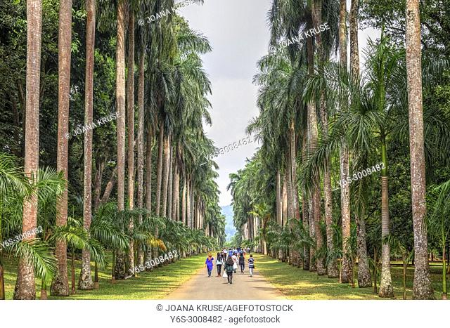 Royal Botanical Gardens, Peradeniya, Kandy, Central Province, Sri Lanka, Asia