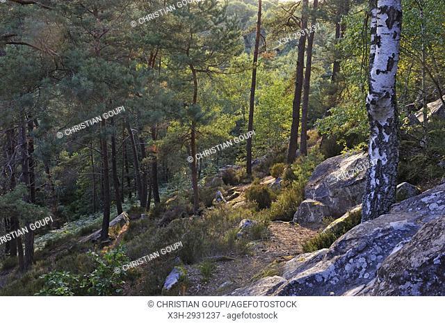 Rochers d'Angennes site in the Forest of Rambouillet, Haute Vallee de Chevreuse Regional Natural Park, Yvelines department, Ile-de-France region, France, Europe