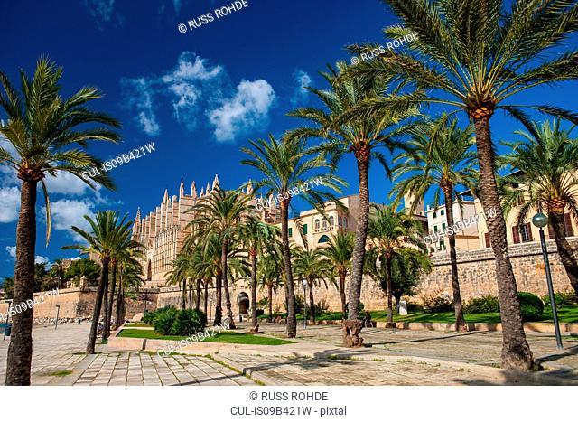 Palm trees and La Seu Cathedral, Palma de Mallorca, Majorca, Spain
