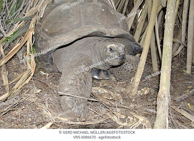 Giant turtle in Haller Park in Mombasa, which has been renaturated and turned into a wildlife-sanctuary