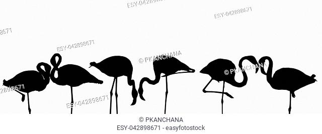Set of silhouette bird flamingos standing isolated on white background