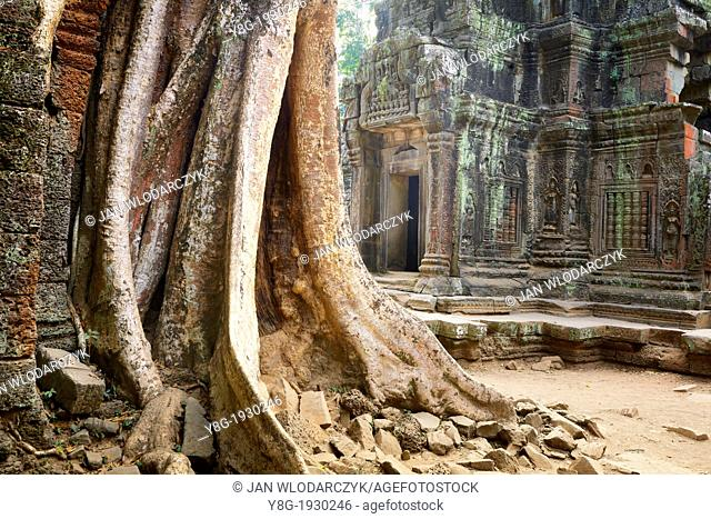 Ta Prohm Temple, Angkor Temples Complex, Siem Reap Province, Cambodia, Asia