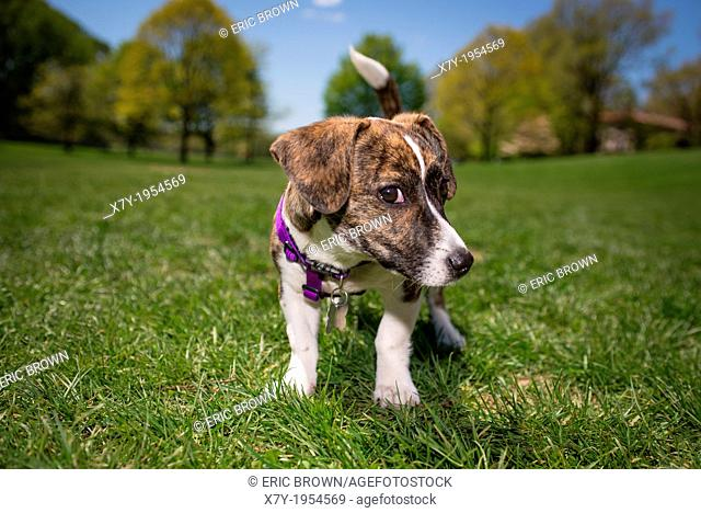A puppy in a park