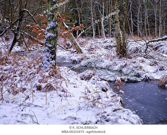 Germany, Mecklenburg-Western Pomerania, Western Pomerania Lagoon Area National Park, winter day in Darss Forest, icy stream course