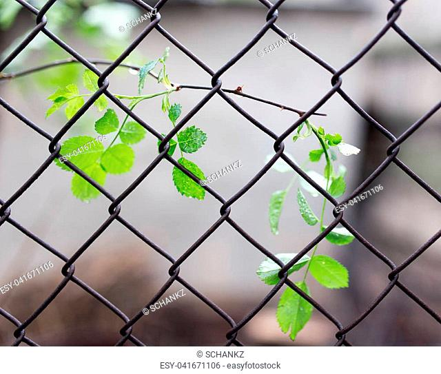 the leaves on the plant for metal mesh