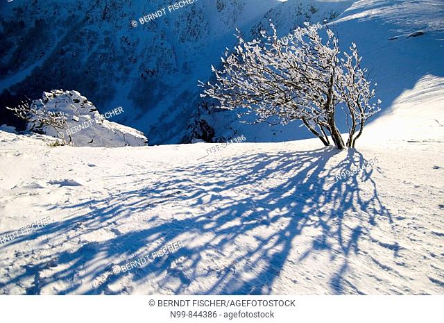 Hohneck, steep cliff of Col du Falimont, snow and hoar-frost in winter, Vosges, lower mountain ranges, Alsace, France