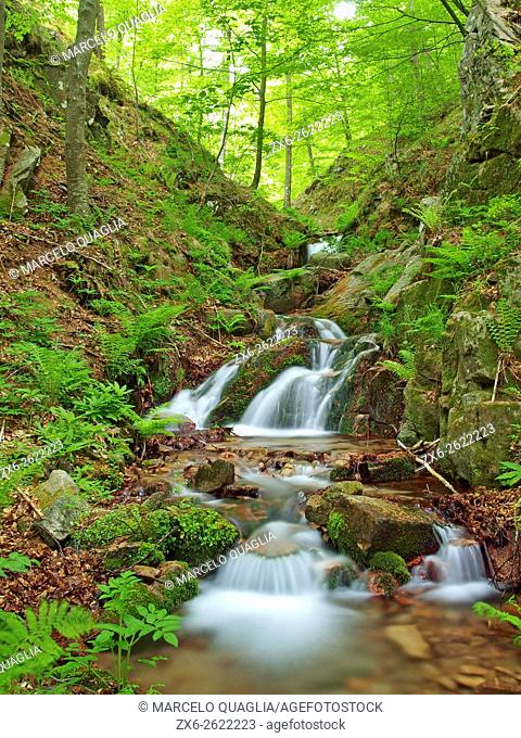 Marianegre stream. Spring time at Montseny Natural Park. Barcelona province, Catalonia, Spain