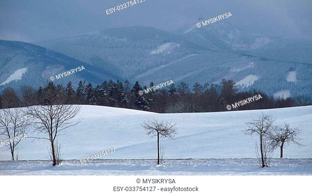 Several trees in the fields and Beskydy mountains behind them in winter