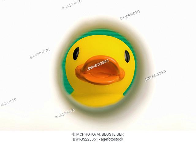 Rubber ducky and toilet paper