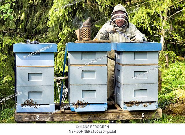 Beekeeper near beehives