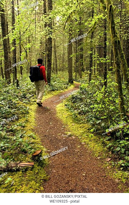 Backpacker on trail - Federation Forest State Park, Washington