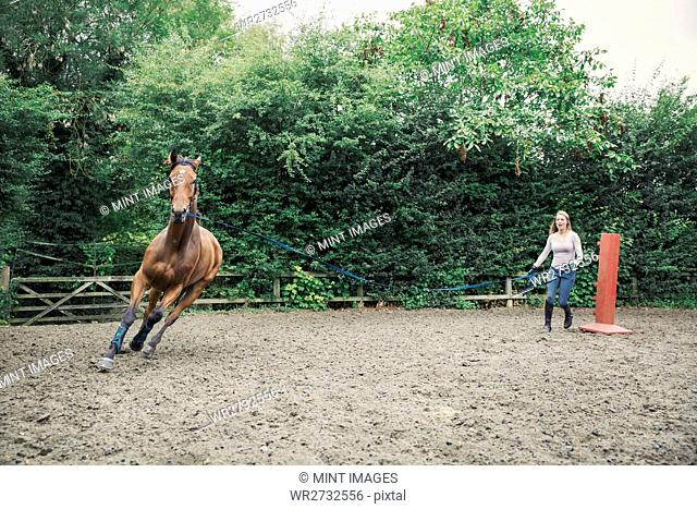 Woman exercising a brown horse in a paddock