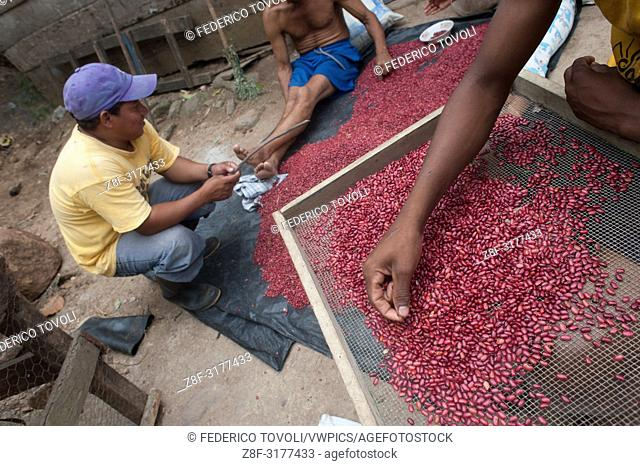 Reds or blacks beans are the basis of the national diet, in the archipelago of Solentiname all have their own cultivation. Nicaragua