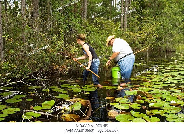 Collecting amphibian larvae in pine flatwoods pond, Osecola National Forest, Clay Co., FL
