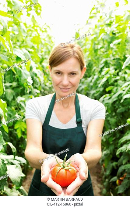 Portrait of woman holding ripe tomato in greenhouse