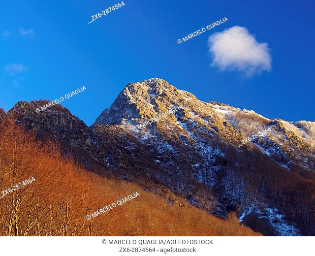 Winter beech forest and Les Agudes Peak with snow. Montseny Natural Park. Barcelona province, Catalonia, Spain