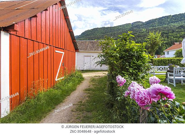pathway with garden, Solvorn, Norway, lane with shed and roses