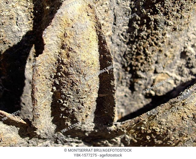 Rusted iron leaf
