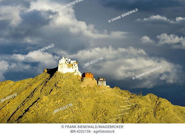 The monastery Namgyal Tsemo Gompa and Tsemo Fort on a mountain ridge, Leh, Jammu and Kashmir, India