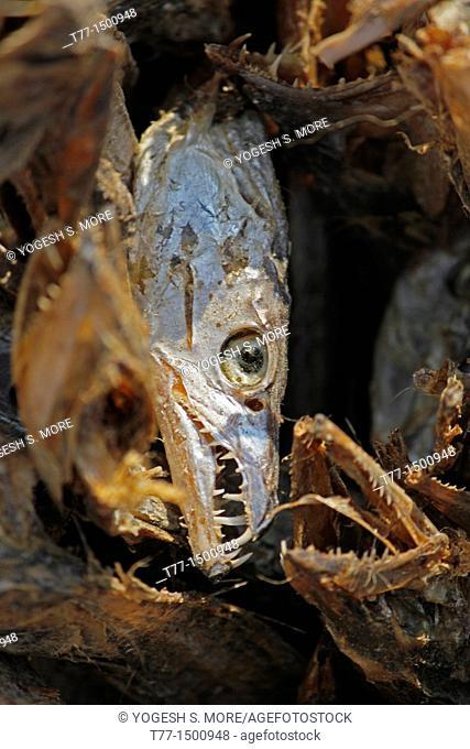 Dried fish, Arunachal Pradesh, India