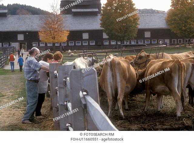 cows, Woodstock, VT, Vermont, People watching livestock at Billings Farm and Museum in Woodstock in autumn