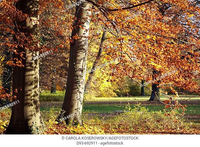 Germany, Brandenburg, autumn, landscape, park