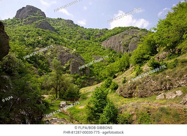 View of botanically-rich protected area, with Oriental Hornbeam Carpinus orientalis and Manna Ash Fraxinus ornus growing on volcanic rock, near Rila, Bulgaria