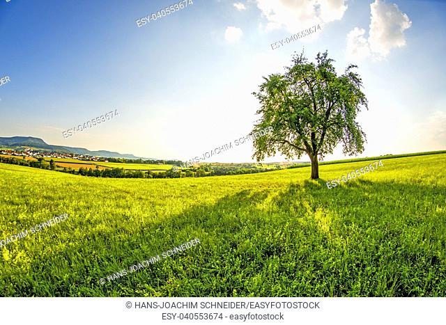 landscape with meadow, tree and view to the German highlands Swabian Alb