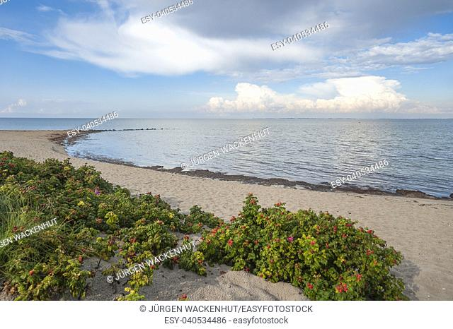 Beach, Heiligenhafen, Baltic Sea, Schleswig-Holstein, Germany, Europe