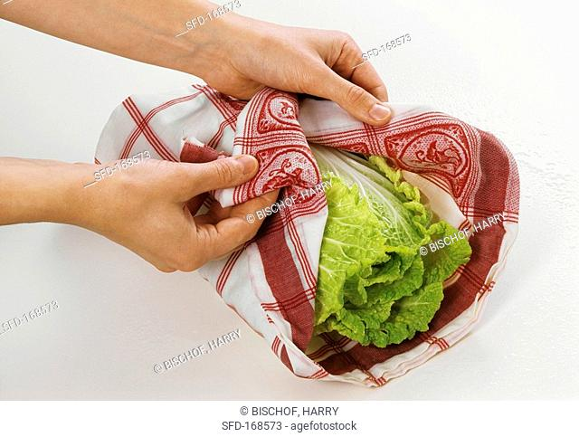 Wrapping Chinese cabbage in damp cloth