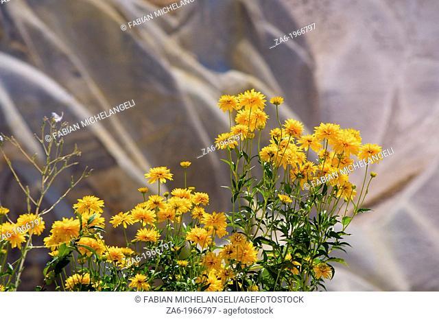 Marigolds. Pigeon Valley, Goreme. Cappadocia, Central Anatolia, Turkey