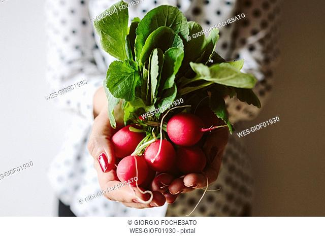 Woman's hands holding bunch of red radishes