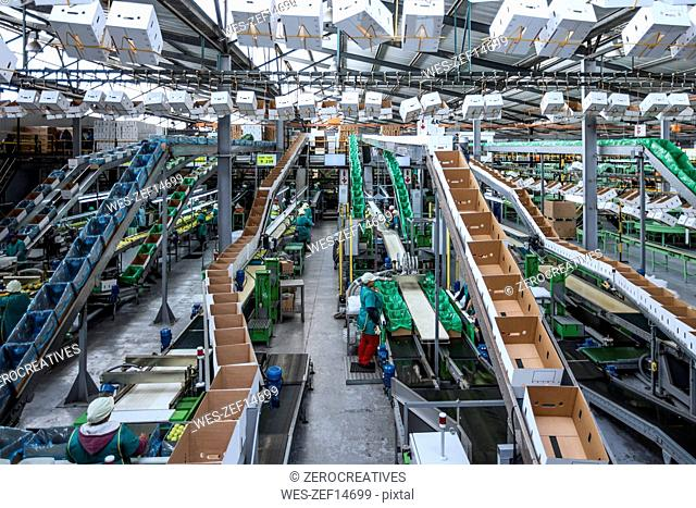 People working in apple factory