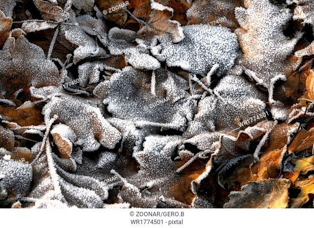 Winter on the ground