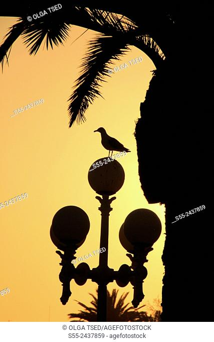 A seagull sitting over the streelight in the sunset, backlit. Maremagnum area, Port Vell, Barcelona, Catalonia, Spain